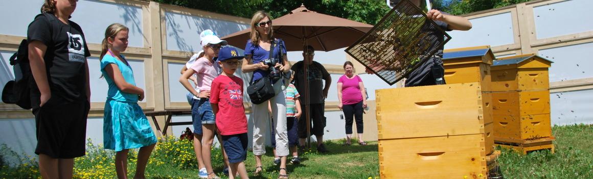 visite de ruche à l'insectarium, Miel Montréal