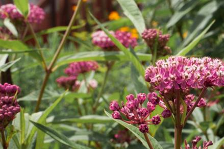 Nourrir la biodiversité, jardin pour pollinisateurs, oasis mellifère