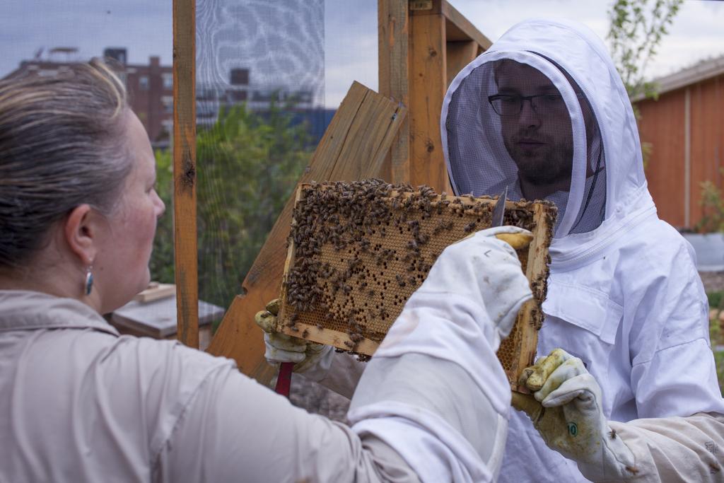 aide gestion ruches, accompagnement rucher, apiculture écologique et responsable, Grand Montréal, Ruches pour organisation, pédagogie autour de la biodiversité, ruche comme outil pédagogique, sensibilisation à la biodiversité