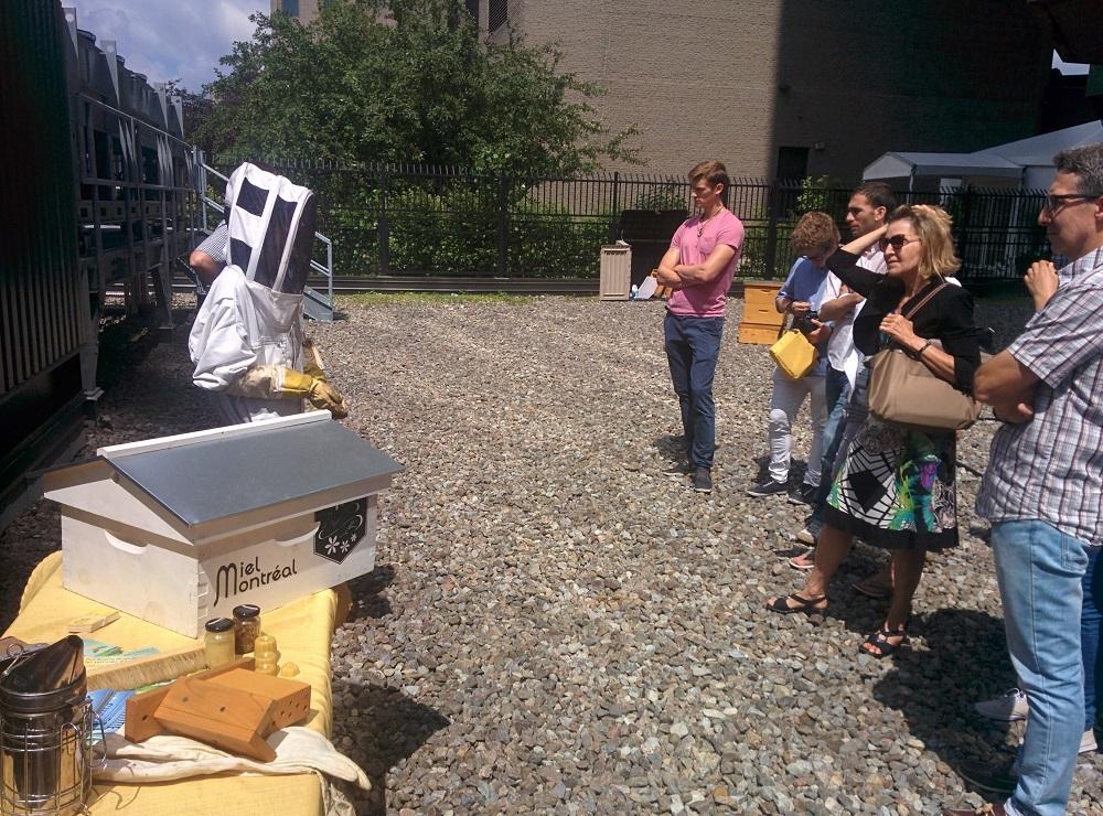 team building, fédérer salarié, atelier en équipe, apiculture outil pédagogique