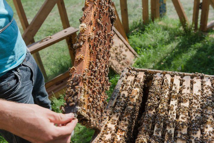 examen visuel ruche, diagnostic rucher, maladie, varroa, traitement sanitaire abeilles, gestion éco-responsable ruches, saines pratiques apicoles, formation, apprendre