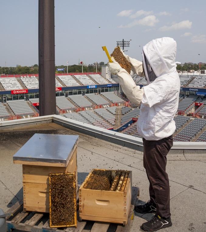 Site d'apiculture urbaine, Montréal, Québec, ville, ruches, sécurité, apiculture sur le toit