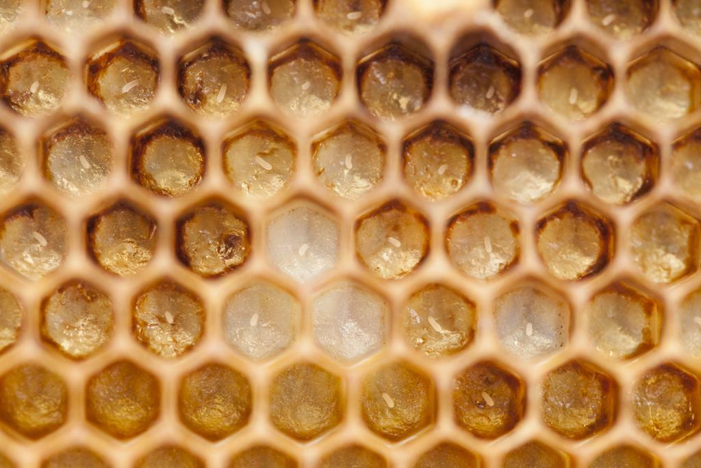 Membres de la Coop Miel Montréal, réseau d'apiculteurs, service conseil, Montréal, Apiculture responsable, bonnes pratiques