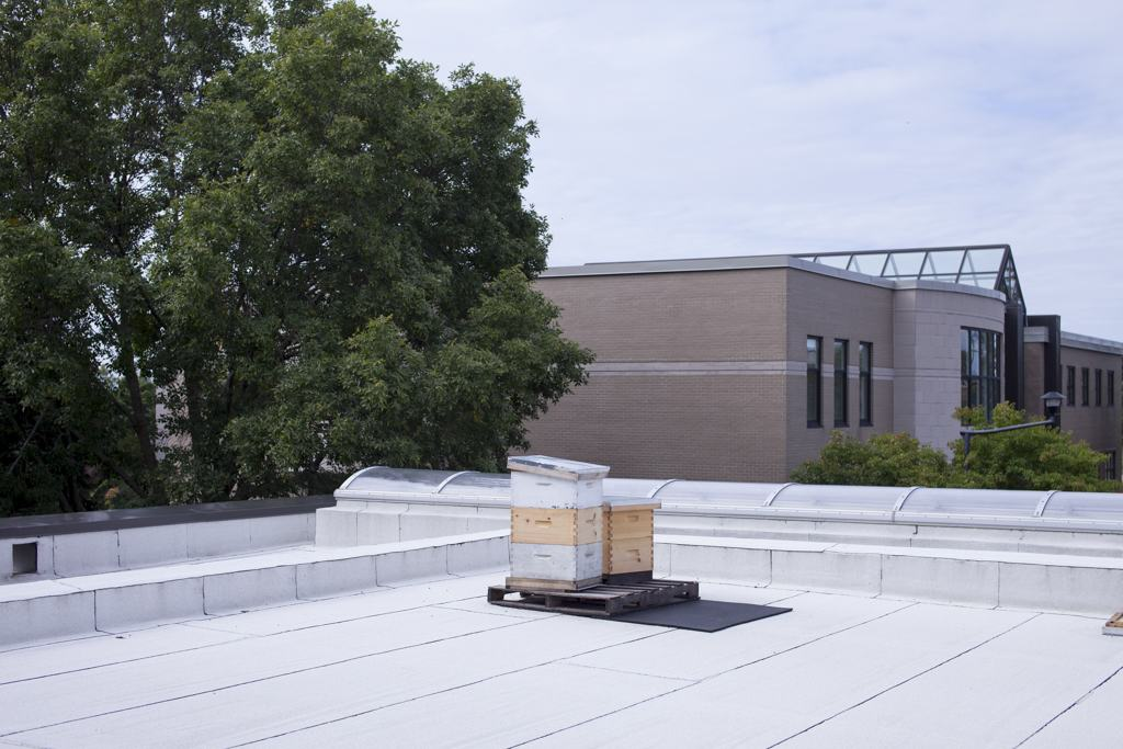 Urban beekeeping, hive management, hive on roof, healthy set-up for bees