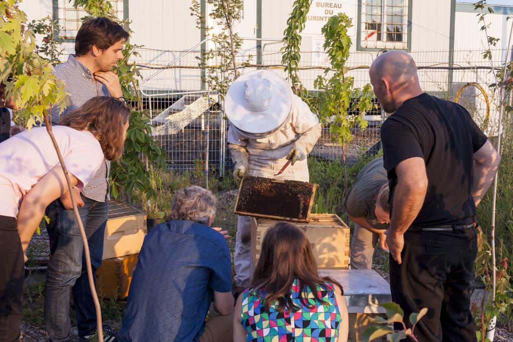 apprendre l'apiculture, collectif, pédagogie, apiculture responsable, en ville
