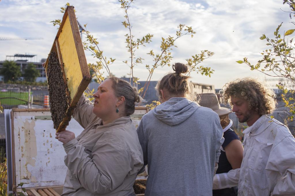 Groupe formation, échanges apicoles, partage des meilleures pratiques d'apiculture, Le Virage Montréal, Campus UdeM Outremont, Miel Montréal