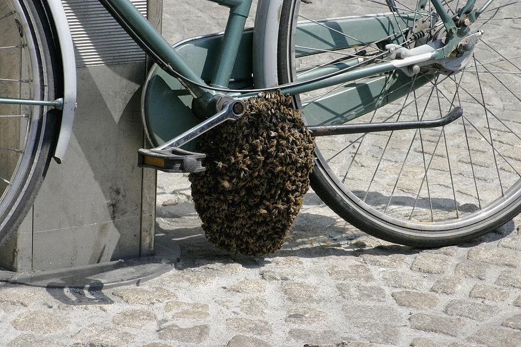 essaimage, essaim d'abeilles en ville, prévention, respect biodiversité