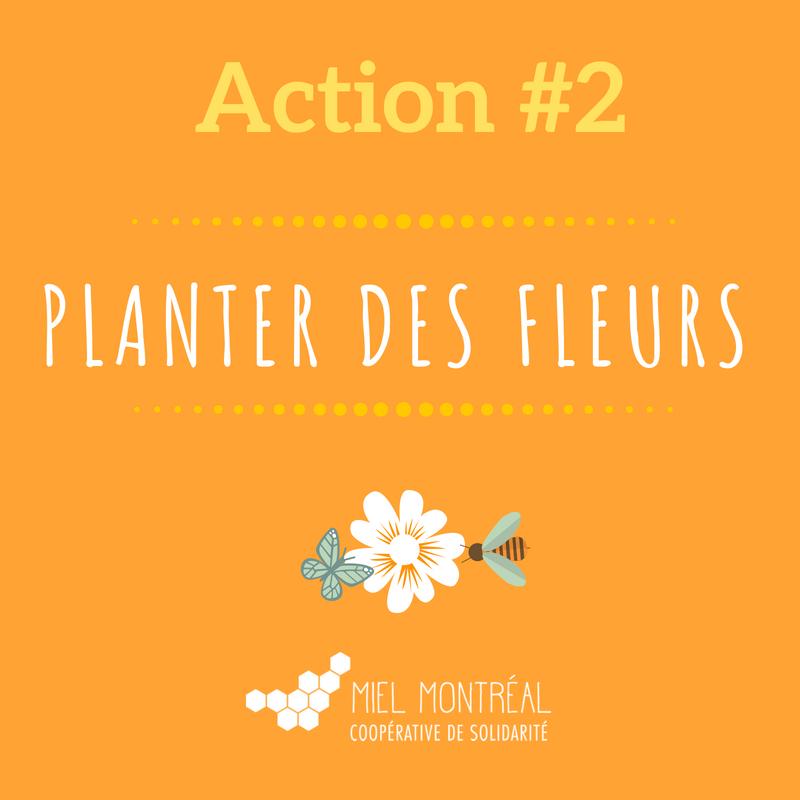Plantes mellifères, fleurs pour aider les abeilles, abeilles à miel, abeilles extinction, gestes pour sauver les abeilles, miel, pollen pour les abeilles