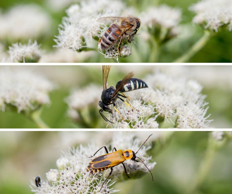 apprendre sur la biodiversité, les autres pollinisateurs, encourager la Coop, donner de son temps, formation bénévole