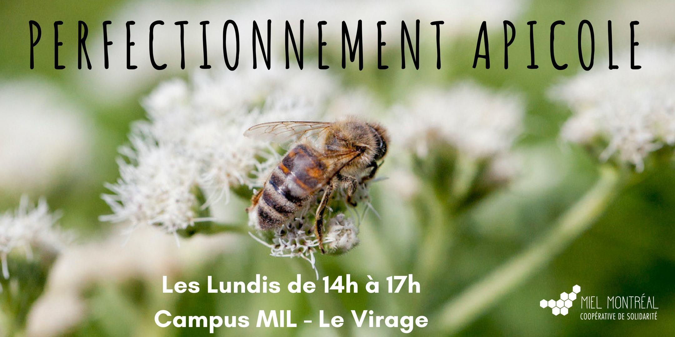 Ateliers, perfectionnement apicole, expertise apiculture, maladies, gestion ruches, formation pratique,