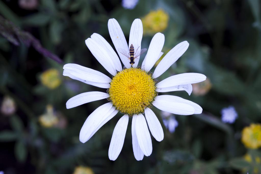 jardin pour pollinisateurs, abeilles, plantes mellifères, saines pratiques apicoles, nourrir les abeilles, sirop de sucre, hivernage ruches, apiculture éco-responsable