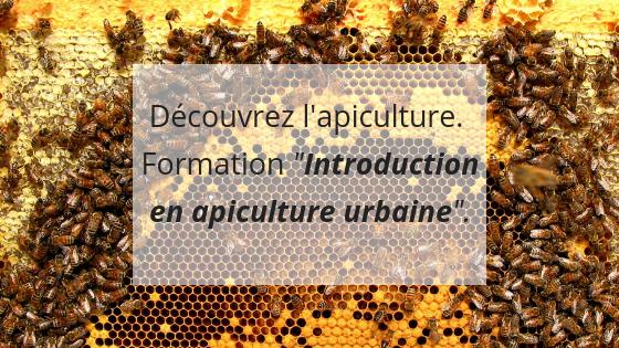 Formation apiculture, cours théorique, découvrir apiculture, Montréal, initiation apiculture, aider les abeilles, maladies abeilles, entretien ruche, gestion saine d'une ruche, bonnes pratiques apicoles