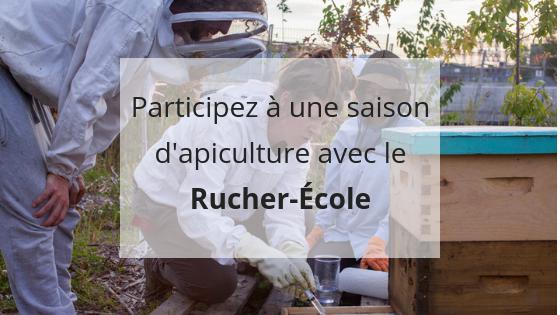 Rucher Ecole Miel Montreal, formation pratique, apiculture responsable, apiculture urbaine, apiculteur amateur, pratiquer l'apiculture, Montréal, Québec