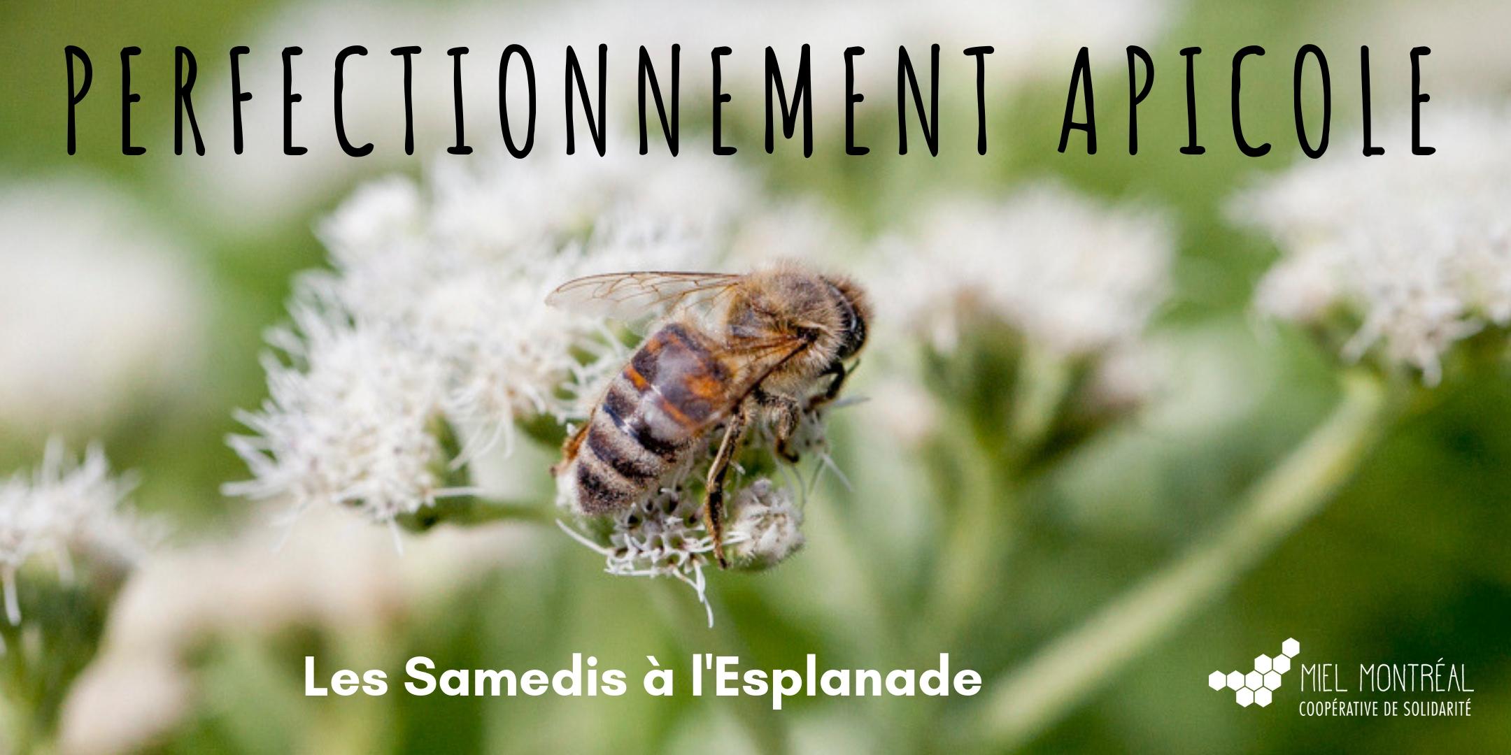 Ateliers, perfectionnement apicole, perfectionnement connaissances apiculture, niveau avancé, apiculteur expert, techniques apicoles alternatives, biodiversité