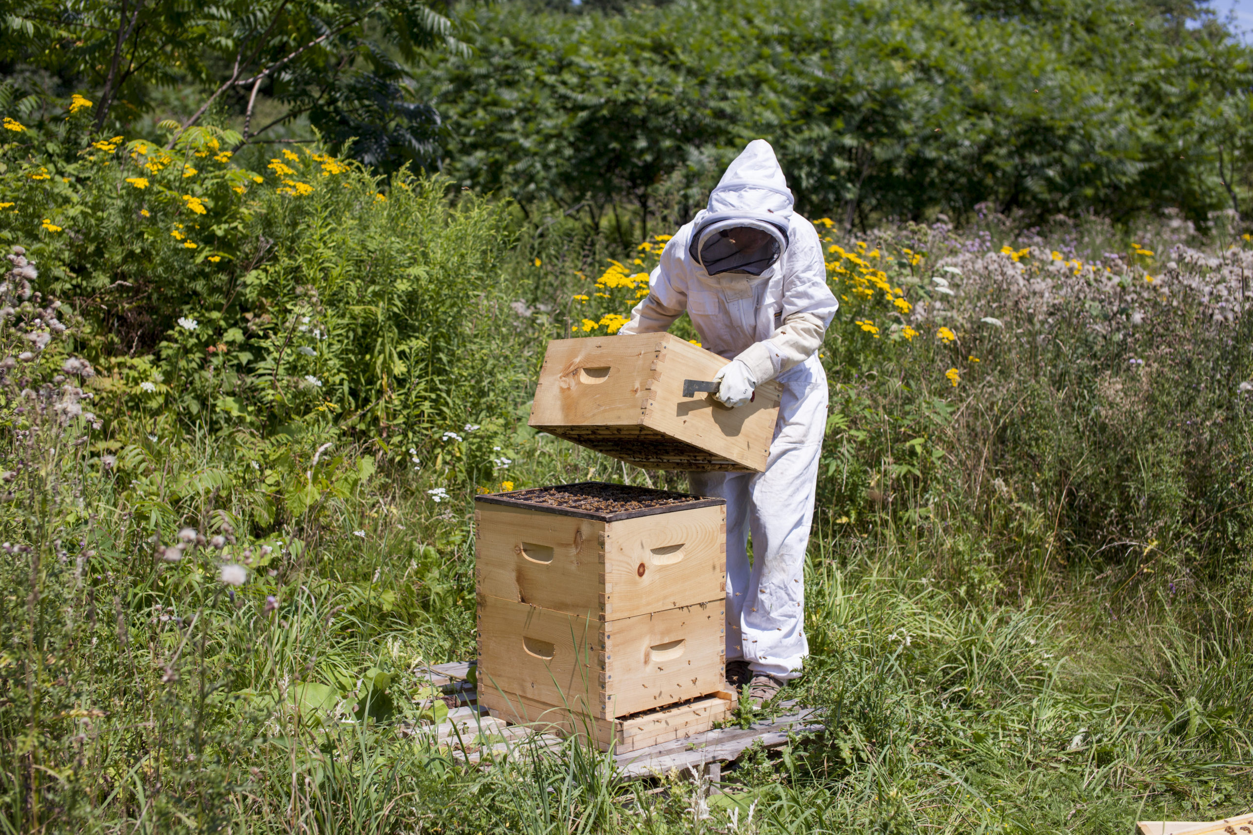 reine, ouvrière, abeille, alvéole, ruche, activités abeilles, gestion rucher, formation, initiation