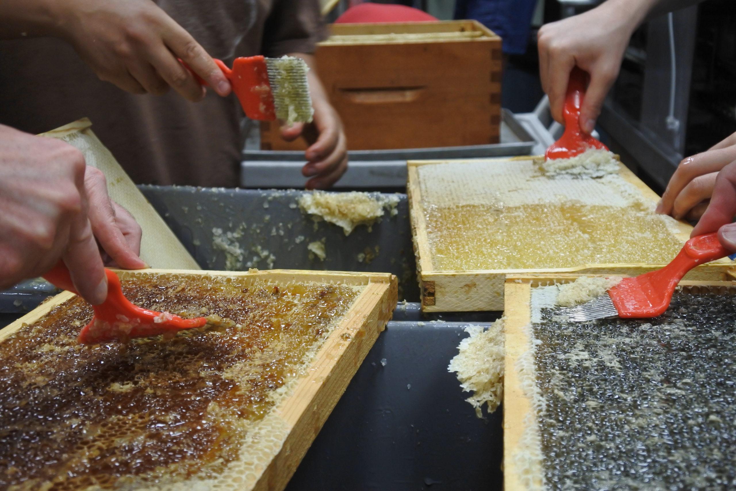 extraction de miel, apiculture urbaine, production de miel, récolte, gestion éco-responsable ruches, saines pratiques apicoles, formation, apprendre