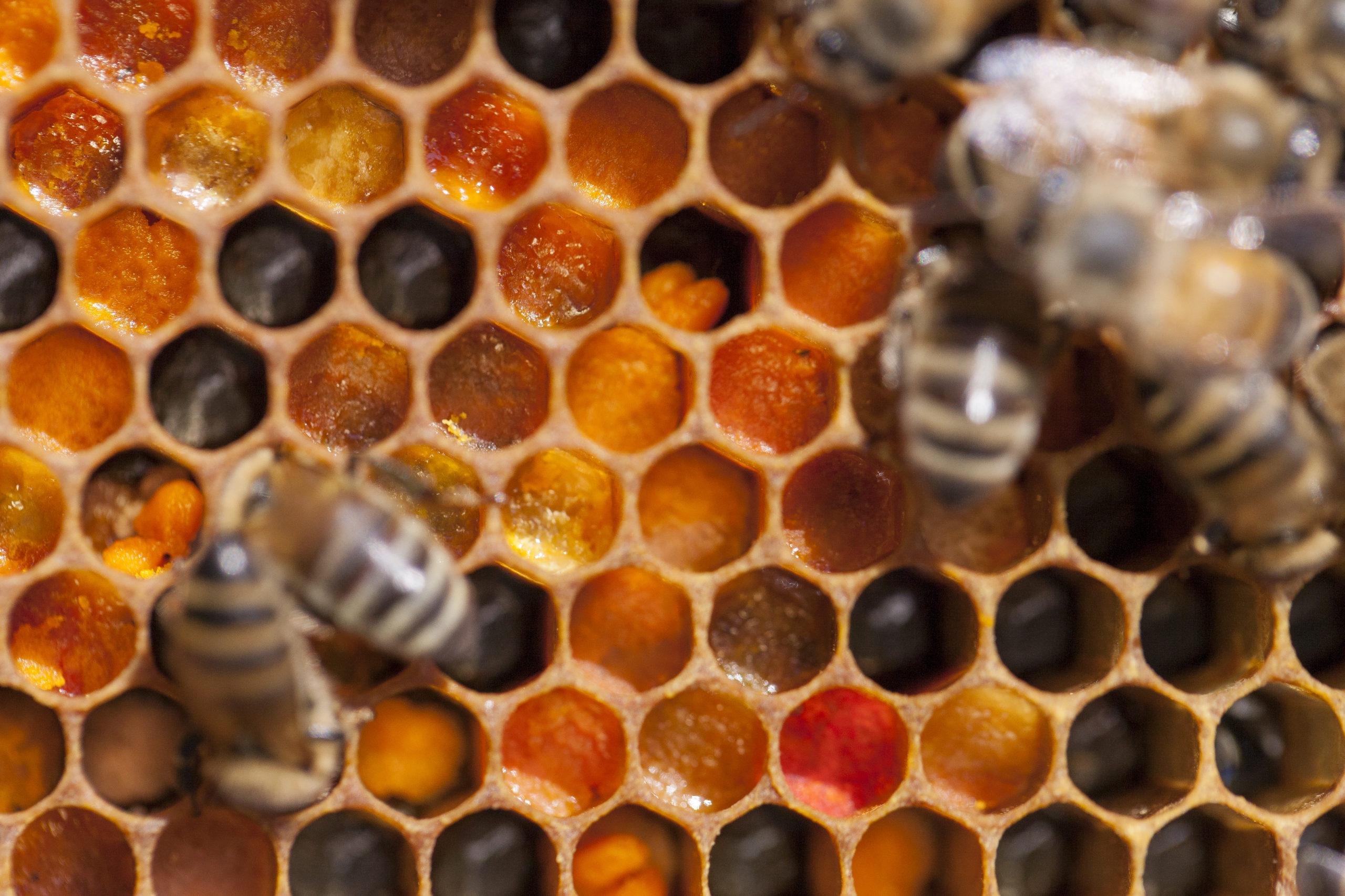 pollen abeille, produits de la ruche, apiculture urbaine